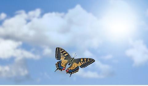 cielo mariposa s